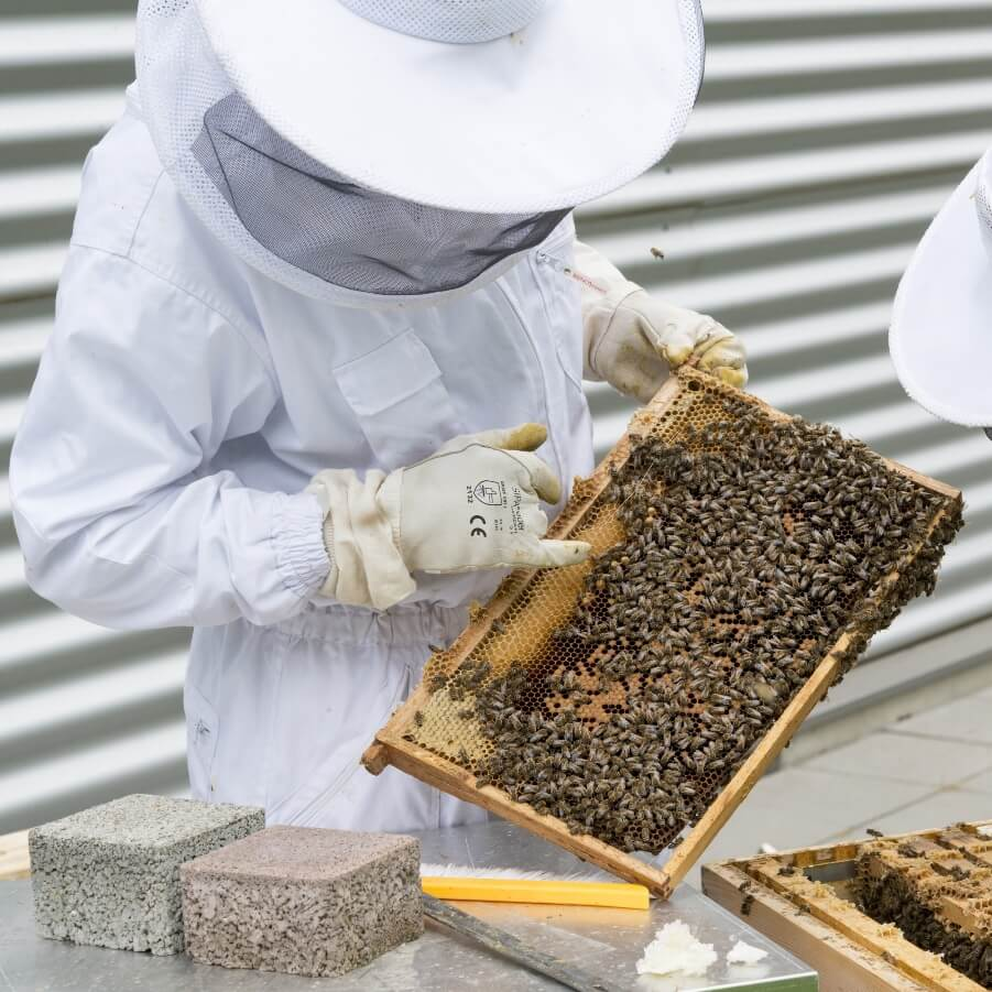 The Insider's Guide To Types Of Beehive