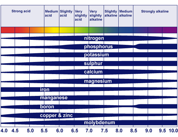 plant nutrient absorption at different pH 2